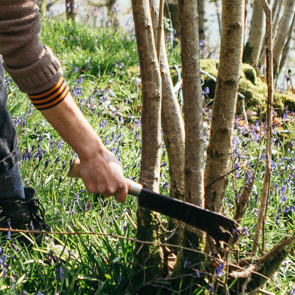 Hazel coppiced wood is cut in the winter. Selecting a pole with silvery bark, that will become a chair leg.